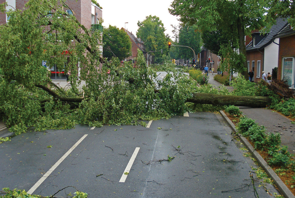 Trees down across town road