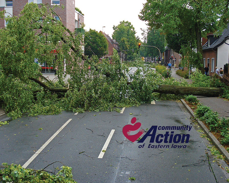 Downed trees across a town road